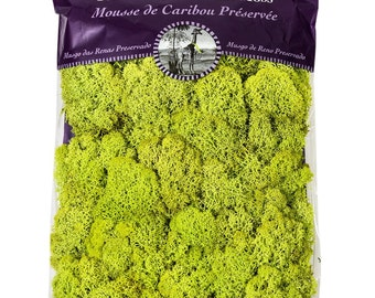Preserved Reindeer Moss by Super Moss in 8oz Bag (Forest and Chartreuse)