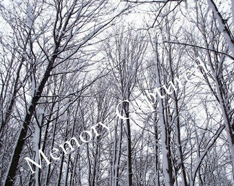 Trees Branches Snow Fine Art Photography Digital Download Canada Winter Forest Nature Landscape Home Decor Photo