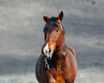 Wild Horse Fine Art, horse art, horse photography, wild horse, wild mustang