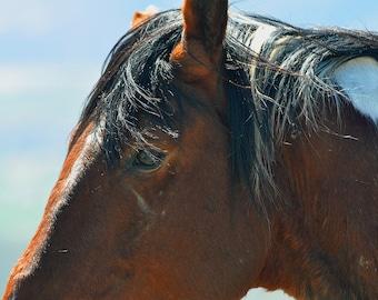 Tessan, Wild Mustang Stallion, Mustang, Fine Art, Horse Art, Equine Art