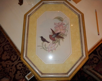VINTAGE GOULD BIRD Picture Wall Hanging