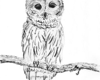 Charcoal drawing, GICLEE PRINT, Owl Portrait