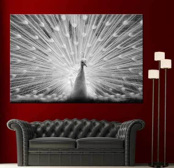 Peacock Feathers Black White Wall Art Home Decor Canvas Giclee