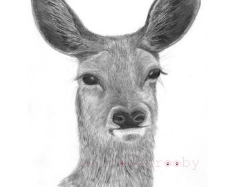 deer giclee print/ A3 deer graphite drawing/ deer fine art print