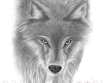 Wolf print giclee print/ wolf art print/ wolf graphite drawing