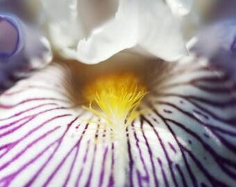 "Photto ""Fleur-de-lis"""