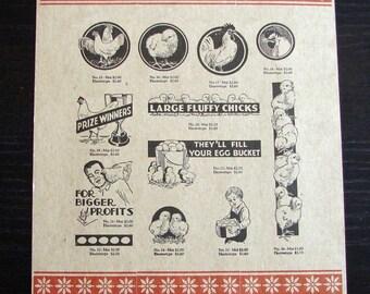 Letterpress Vintage Chickens Poster