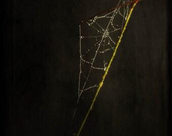 spider web goth dark art rain droplets nature fine art photography home decor Halloween