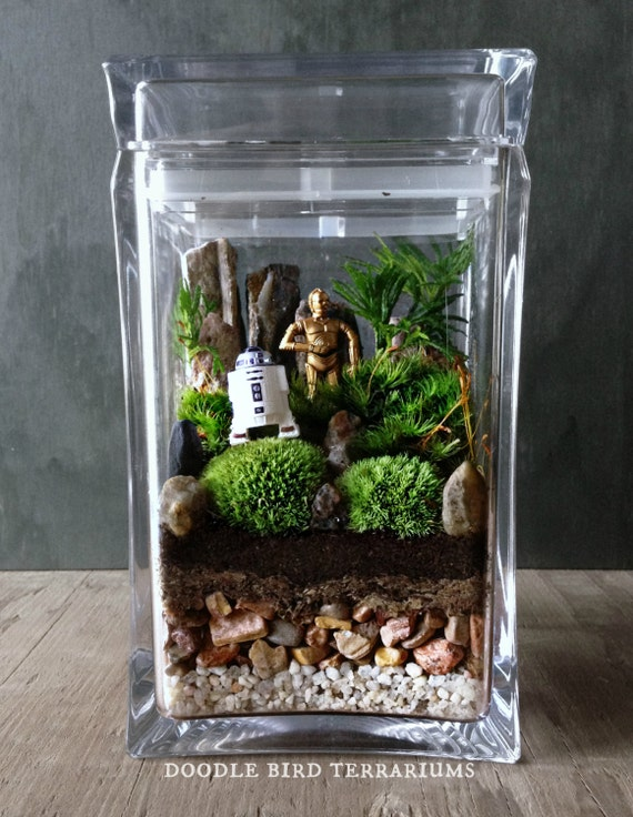Star wars terrarium r2 d2 c 3po ewok yoda movie by for Indoor gardening documentary