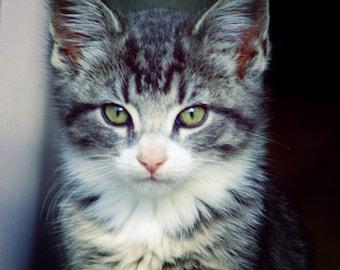 Tiger kitten, black/white color photo, home decor