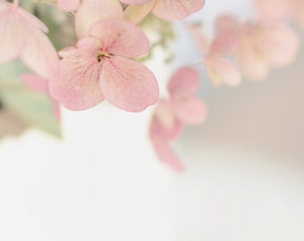 pretty  in pink hydrangea-flower photography - flower photo- cottage garden (5 x 7 Original fine art photography prints) FREE Shipping)