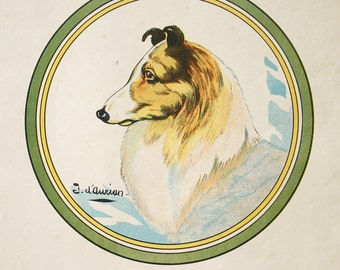Collie Dog Print Vintage French