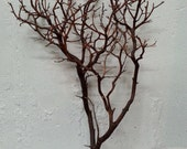 Manzanita Branches Natural Red 18 Inches