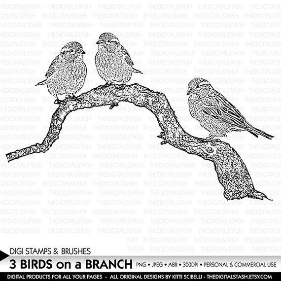 Birds on a Branch - Digital Stamp and Brush - INSTANT DOWNLOAD - for Collage, Scrapbooking, Journaling, Cards, Crafts, Invites and More