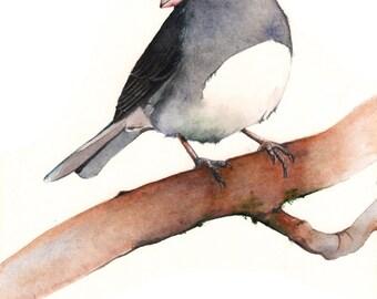 Junco Watercolor Painting ORIGINAL painting