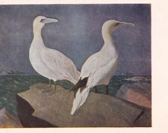 Vintage Vrigt (Seabirds) Postcard - 1954, Izogiz