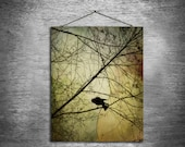 Crow Speak - multiple sizes fine art photo - black bird crow red gold green tree - free U.S. shipping