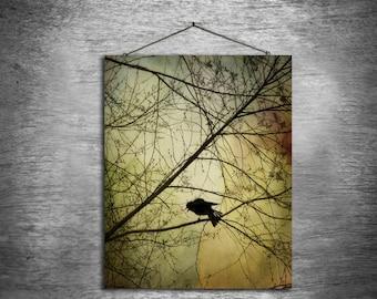 Crow Speak - multiple sizes fine art photo - black bird crow red gold green tree - free U.S. shipping