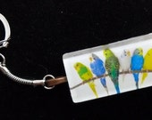 6 Budgies Rectangular Glass Tile Photo Keychain