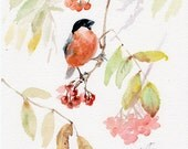 Bullfinch bird print, red bird on a branch with berries GICLEE PRINT of original watercolor