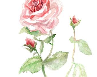Pink Rose print, GICLEE Print of original painting, flower watercolor, garden-lovers gift