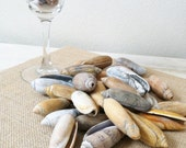 Reserve for Nancy 50  Large Olive Sea Shells Ocean Tumbled Variegated  brown gray white tan orange yellow (lot 734)