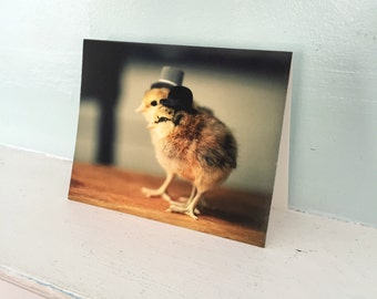 Chicks in Top Hats Chickens Chicken Card Funny Baby Animal Photography