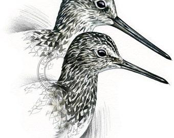 Yellowlegs (Greater and Lesser) - bird art, wildlife art - nature print of original artwork