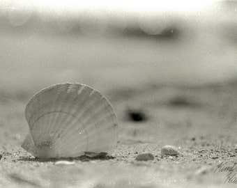 Photography, Black and White, Film, Beach, Shell on Sand