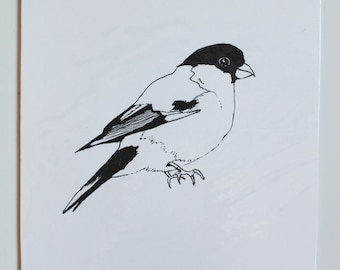 Limited edition bullfinch bird screenprint in black and white