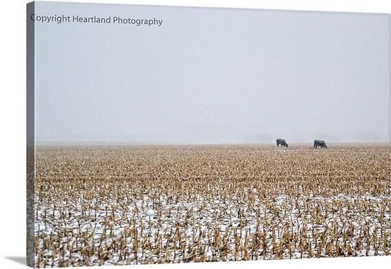 Neutral Colors, Photo Canvas, Nature Landscape, Farm Photography, Cow Picture, Corn Field Image, Winter Picture, Snowstorm, Midwest Nebraska