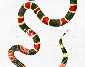 Snake Clip Art 'Eastern Coral'Digital PNG Image for Mix Media, Prints, Scrapbooking, Wall Art, Collages, Paper Crafts, Graphic Design...