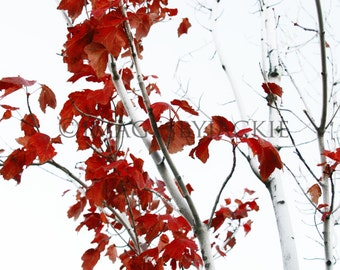 Red Tree 1 Fine Art Photography Digital Download