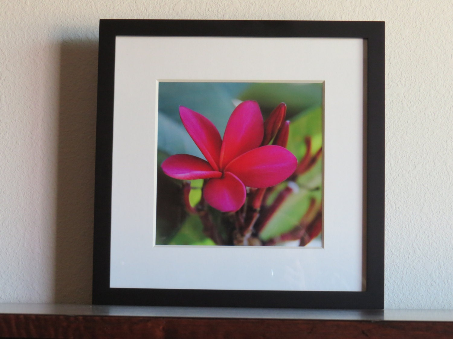 Red Plumeria Hawaii Framed Art Fine Photography By