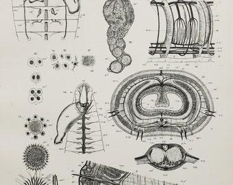 Earthworm Anatomy Circulation Reproduction Locomotion