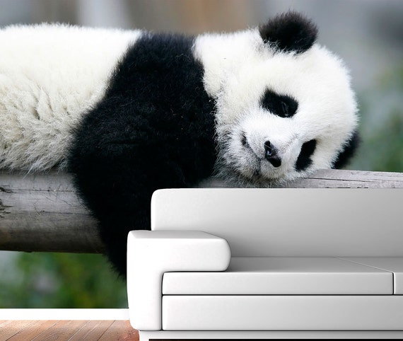 panda relaxing photo wall mural repositionable adhesive impressive wall murals for your bathroom