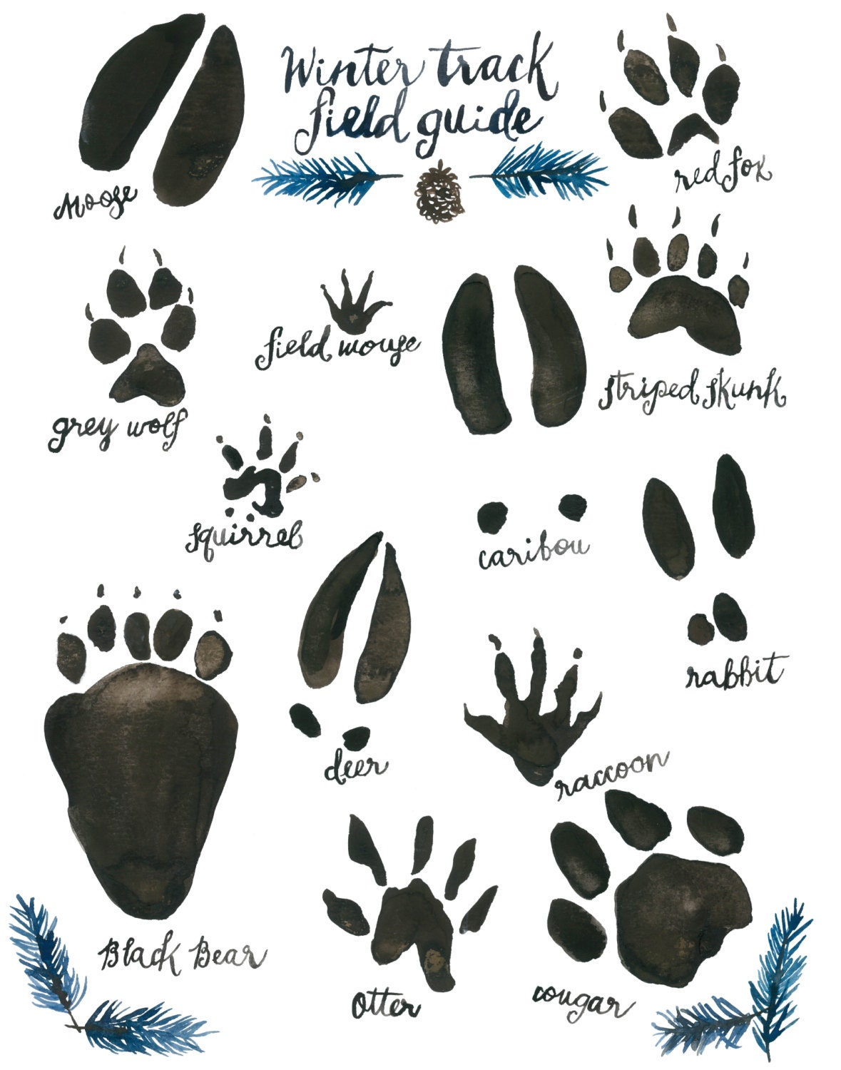 It's just a photo of Current Printable Animal Tracks