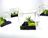 Air Plant Eco Glass Cube // Modern Air Plant Terrarium Cube, Modern Home Decor, Unique Christmas Gift, Unique Gift for Men and Women