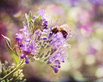 Nature Photography, Honey Bee Lavender Purple Flowers Photo, Springtime Garden Art, Wildflower Spring Meadow Field Dreamy Bokeh Light Print