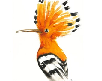Bird watercolor, Hoopoe Bird Painting, Hoopoe Watercolor, Print,  Bird Art, Bird Illustration, Animal illustration, Orange Bird,