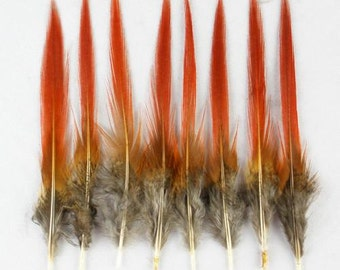30pc Red Tipped Lady Amherst Pheasant Feathers 4-6'' Craft/Fly/Fishing
