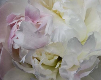 Pink Peonie - Fine art Print