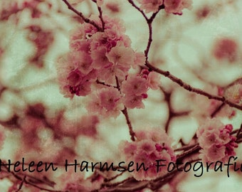 Pink Blossom -  photo print