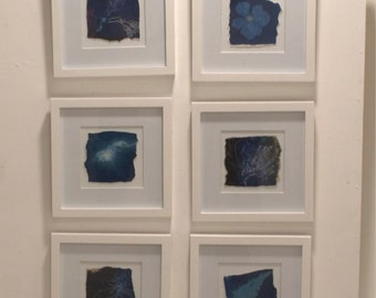 cyanotype/ photography/ framed art/ One Day in the Garden