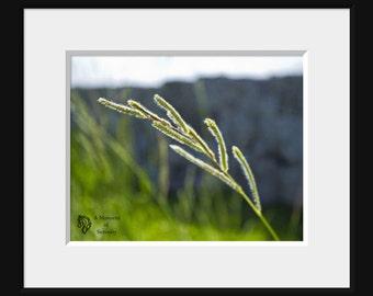 Horse Hay Field Photograph - Hay Macro Photography - Horse Country - Fine Art - Summer Decor - Country Decor Photo