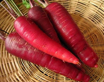 Carrot Seeds- Cosmic Purple- 200+  Seeds