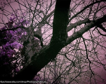 Fine Art Photography of a Purple Tree, Tree Photography, Nature Photo, Bare Tree Branches, Home Office Decor, Kitchen Wall, Mudroom Decor
