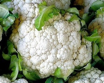 Snowball Self Blanching Cauliflower - 200 seeds (Organic/Non-GMO)