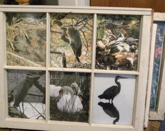 old window with photos of waterfowl