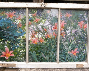 photo of lillies set in very old window